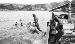 Forming a Community of Fishing Industry - The divers' union has been an autonomous unit since the latter era of the Choson Dynasty. The fishery community has been organized in order to protect the rights of Haenyeo.