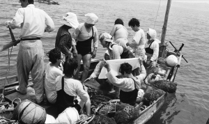 Haenyeo diving from raft-style boat and sailboat